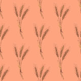 Sketch wheat bran in vintage style. Vector seamless pattern Stock Image