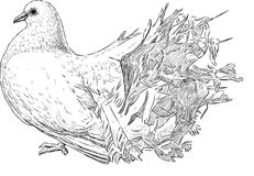 Sketch of a white pigeon Stock Photography