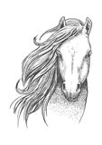 Sketch of wild mustang horse for equine design. Beautiful wild horse sketch icon. Head and shoulders portrait of mustang mare for equestrian sport theme or t Royalty Free Stock Images
