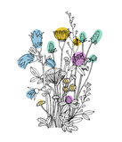 Sketch of the wildflowers on a white background. Hand drawn illustration Royalty Free Stock Images