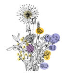 Sketch of the wildflowers on a white background. Hand drawn illustration Royalty Free Stock Image