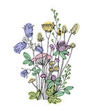 Sketch of the wildflowers on a white background. Royalty Free Stock Images