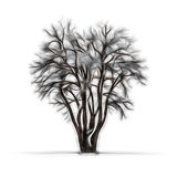 Sketch of winter tree without leaves Stock Image