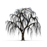 Sketch of winter tree without leaves Royalty Free Stock Image