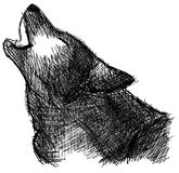 Sketch of a wolf howling isolated Royalty Free Stock Photography
