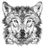 Sketch of wolf royalty free illustration