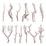 Sketch wood twigs, broken tree branches vector set Stock Image