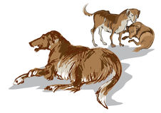 Sketch of yard dogs Stock Photos