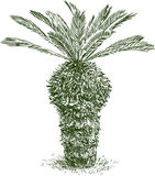 Sketch of a young palm tree Stock Image