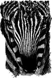 Sketch of a zebra head Stock Image