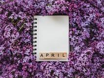 Sketchbook, Leerseite und helle lila Blumen lizenzfreies stockbild