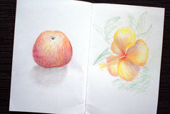 Sketchbook spread with apple and hibiscus drawing Royalty Free Stock Photo