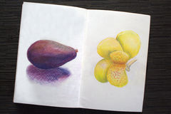 Sketchbook spread with avocado and iris drawing. Hand-drawn tropical flower and exotic fruit. White paper and colorful pastel pencils. Asian travel sketches Stock Photos