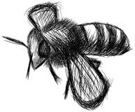 Sketched of a Bee isolated Stock Photography