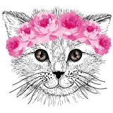 Sketched cat with pink rose flowers in hair Stock Photo