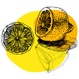Sketched citrus fruits Royalty Free Stock Photography