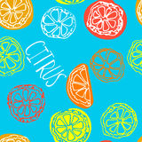 Sketched citrus fruits Royalty Free Stock Image