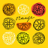 Sketched citrus fruits Stock Images