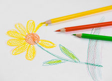 Sketched drawing of flower Royalty Free Stock Photo