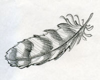 Sketched eagle feather. Hand drawn pencil sketch of a striped eagle feather. Vintage writing tool and decorative object Royalty Free Stock Image