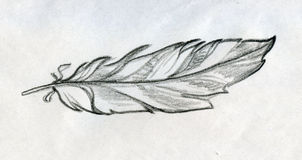 Sketched feather Stock Image