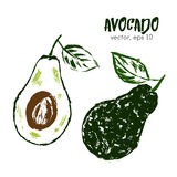 Sketched fruit illustration of avocado. Royalty Free Stock Images