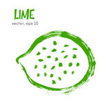 Sketched fruit illustration of lime. Royalty Free Stock Images