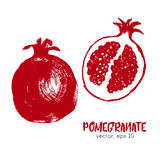 Sketched fruit illustration of pomegranate. Stock Image