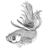 Sketched hand drawn aquarium fish Cockerel.  Stock Photo