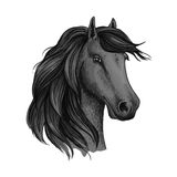 Sketched head of mustang or horse, stallion. Head sketch of horse mustang or stallion. Dapple gray broodmare or mare, foal or filly with wavy mane, horsey Royalty Free Stock Photo