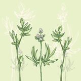 Sketched herbs, green plants Royalty Free Stock Photography