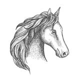 Sketched horse head icon of arabian stallion Stock Image
