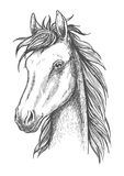Sketched horse head icon for t-shirt print design Royalty Free Stock Photos