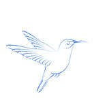 Sketched hummingbird colibri. Royalty Free Stock Photos