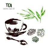 Sketched illustration of  herbal tea. Stock Images