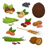 Sketched nuts, beans, seeds and cereals Royalty Free Stock Images