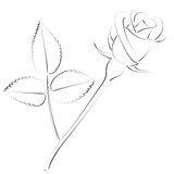 Sketched rose. Royalty Free Stock Photo