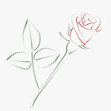 Sketched rose. Stock Photography