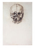 Sketched skull Stock Images