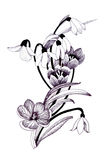 Sketched snowdrops flowers Stock Image