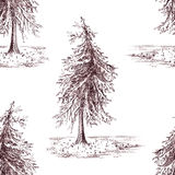 Sketched spruce pine tree sepia seamless pattern background Royalty Free Stock Image