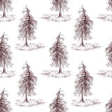 Sketched spruce pine tree sepia seamless pattern background Stock Images