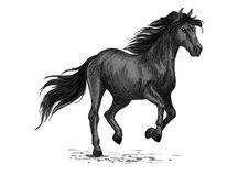 Sketched stallion gallop or horse abling Royalty Free Stock Images