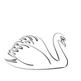 Sketched swan. Stock Images