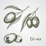 Sketched tree branch and olives bunch. Symbol for olive oil bottle label Royalty Free Stock Photo
