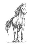 Sketched vector portrait of horse. White mare horse pacing with lifted front hoof. Wild mustang stallion ready for racing sport competition Stock Photo