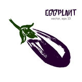 Sketched vegetable illustration of eggplant. Royalty Free Stock Photo