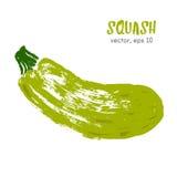 Sketched vegetable illustration of squash. Stock Image