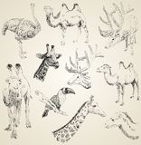 Sketches of animals. Vector set of sketches of animals Stock Photo