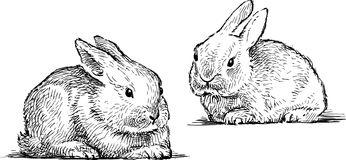 Sketches of the baby rabbits. Vector drawing of two small rabbits Stock Photo